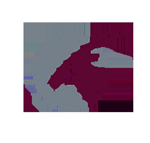 a4Qatar Airlines